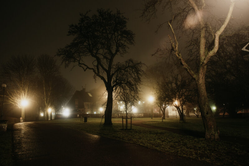 Trees in a dark and foggy park