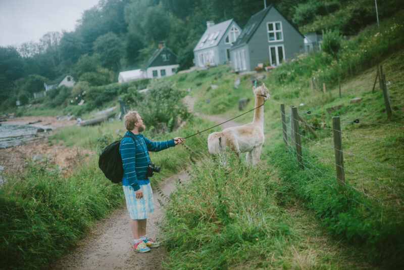Man and alpaca standing on a small path surrounded by green
